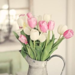 Tulips Have Sprung! Tips On How To Make Them Last