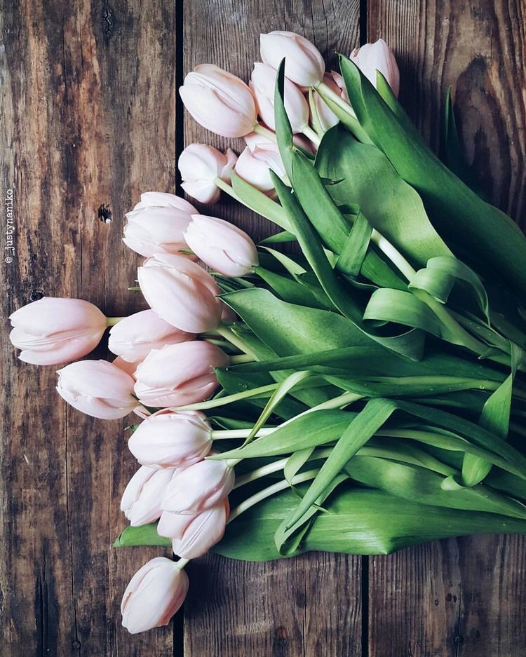 Tulips Have Sprung! Tips On How To Make Them Last 3