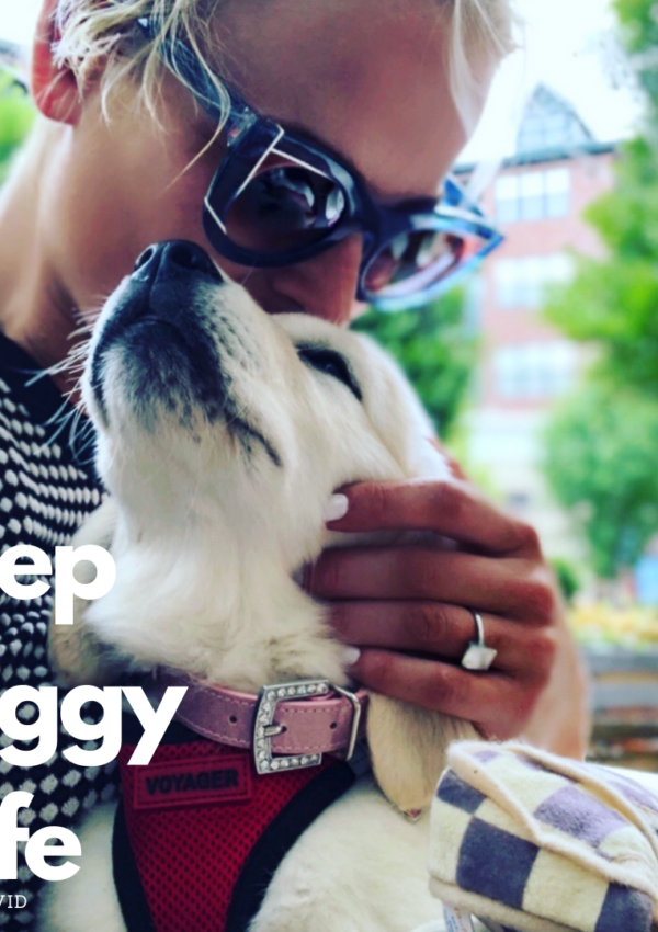 Keep Doggy Safe During #COVID