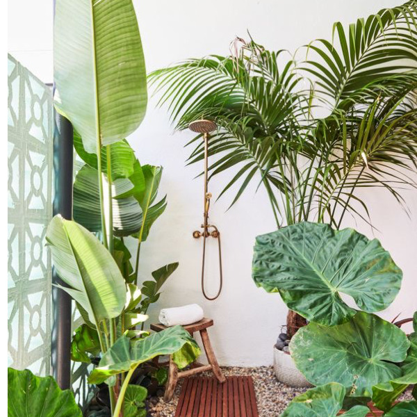 House Plants That Help You Sleep Better & Keep You Healthy